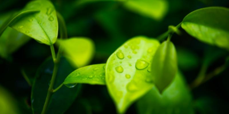 zöld tea segít a káros sejtek ellen egcg